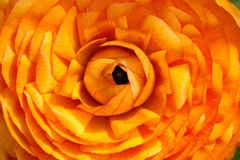 помеец цветка Стоковое Изображение