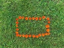 Померанцовая рамка цветка на лужайке зеленой травы Стоковое Фото