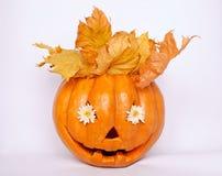 Померанцовая тыква на белой предпосылке Стоковое Изображение