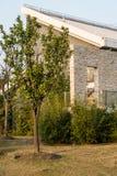 Померанцовое дерево в дворе Стоковые Изображения RF