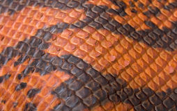 померанцовое snakeskin Стоковые Фотографии RF