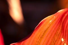 Померанцовые листья Стоковые Изображения RF