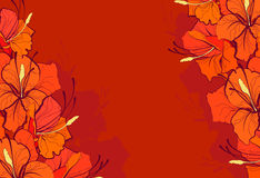 Померанцовые лилии Стоковая Фотография RF