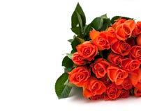 Померанцовые розы изолированные на белизне Стоковые Фотографии RF