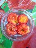 померанцовые розы стоковые фото