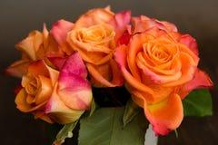 померанцовые розы Стоковые Изображения RF