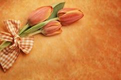 Померанцовые тюльпаны пасхи Стоковое Изображение