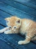 Померанцовый котенок Стоковое Изображение RF