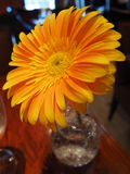 Померанцовый цветок Стоковая Фотография RF