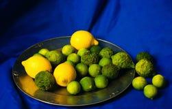 померанцы известок лимонов цитрусовых фруктов Стоковые Фотографии RF
