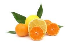 Померанцы и грейпфрут мандарина Clementines Стоковые Фото