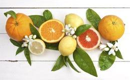 померанцы лимонов цветений Стоковое Изображение RF