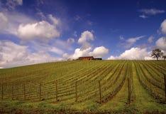 поместье холма Стоковое Изображение RF