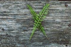 Пометьте буквами x от листьев на деревянной поверхности Стоковое Изображение