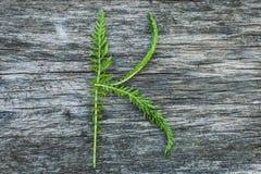 Пометьте буквами k от листьев на деревянной поверхности Стоковое Изображение RF