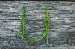 Пометьте буквами u от листьев на деревянной поверхности Стоковые Фотографии RF