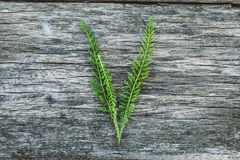 Пометьте буквами v от листьев на деревянной поверхности Стоковое фото RF