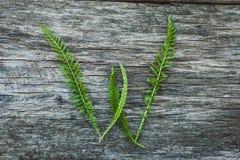 Пометьте буквами w от листьев на деревянной поверхности Стоковая Фотография