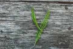 Пометьте буквами y от листьев на деревянной поверхности Стоковое фото RF