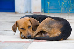помехи собаки Стоковое фото RF