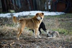 помехи собак стоковые изображения rf