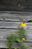 помехи цветка Стоковые Изображения