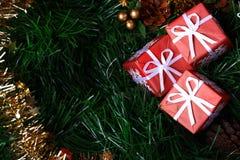 помещенный зеленый цвет ели рождества представляет 3 Стоковое Изображение