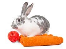 Помойте кролика Стоковое Изображение RF
