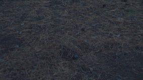 Помох жары развевает от костра на лесе ночи акции видеоматериалы