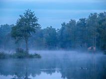 Помох на более низком озере Силези Стоковые Изображения RF