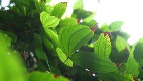 Помох Солнця светя вниз на тропической кровати лист в джунглях видеоматериал