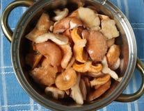 Помытые грибы леса Стоковое Изображение