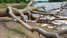 Помытый вверх по старым деревьям Стоковые Изображения RF