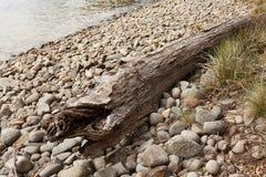 Помытый на берег ствол дерева Стоковое Изображение RF