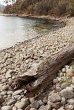 Помытый на берег ствол дерева Стоковое Фото