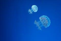 Понедельник и морская водоросль ребенк Стоковые Фото