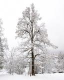 понижается зима truemmelbach Стоковые Изображения