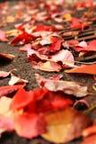 понижаясь красный цвет Стоковые Фото
