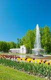 понизьте взгляд peterhof парка Стоковое Изображение