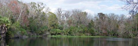 Понизьте парк штата реки Wekiva, Флориду, США Стоковое Изображение RF
