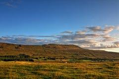 Понизьте Whernside в участках земли Йоркшира Стоковое Изображение RF