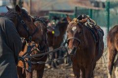 Пони на Pahalgam, Jammu & Кашмире, Индии Стоковые Фотографии RF