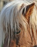 Пони лошади Стоковые Изображения