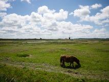 Пони пася в поле Стоковые Изображения