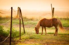 Пони пася на луге Стоковое Изображение