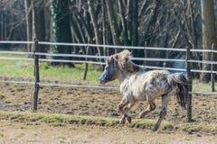 Пони скакать в солнце стоковое изображение