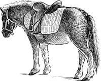 Пони для верховой езды Стоковые Изображения