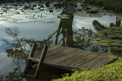 Поохоченное озеро Стоковые Изображения RF