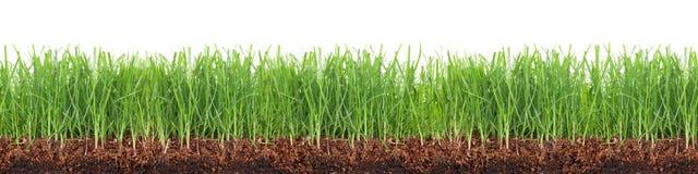 Поперечное сечение зеленого луга изолированного на белой предпосылке стоковые фотографии rf