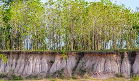 Поперечное сечение земли Стоковые Фото